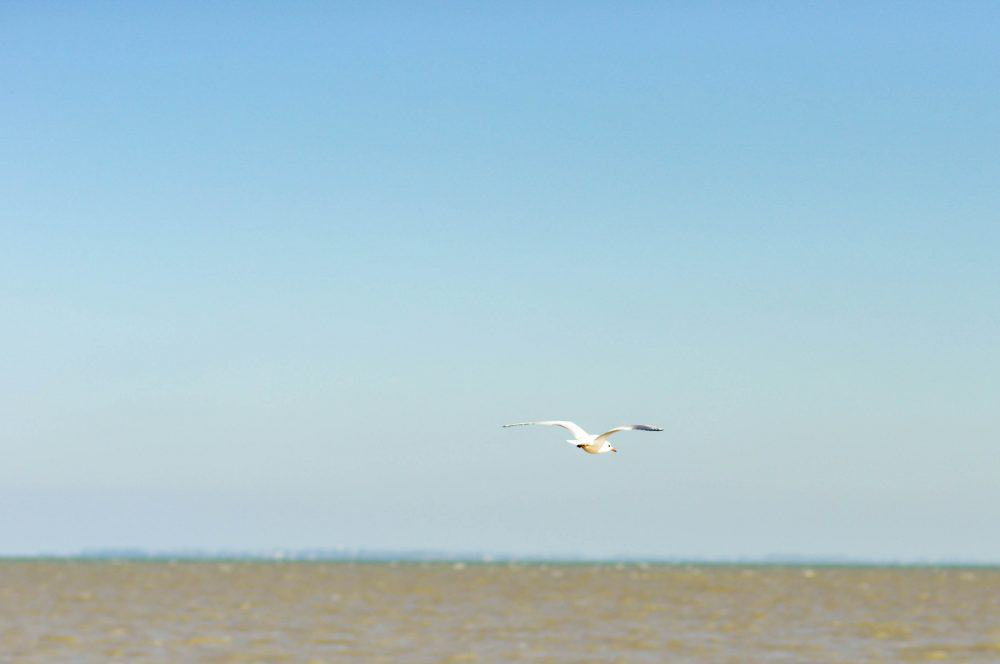 Seagull over Fort Royer Beach, Oleron Island