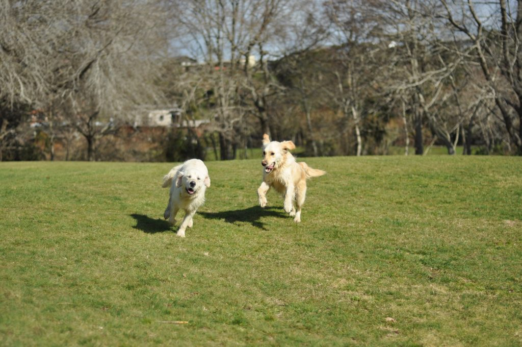 Moving dogs overseas. Our experience of moving abroad with dogs.