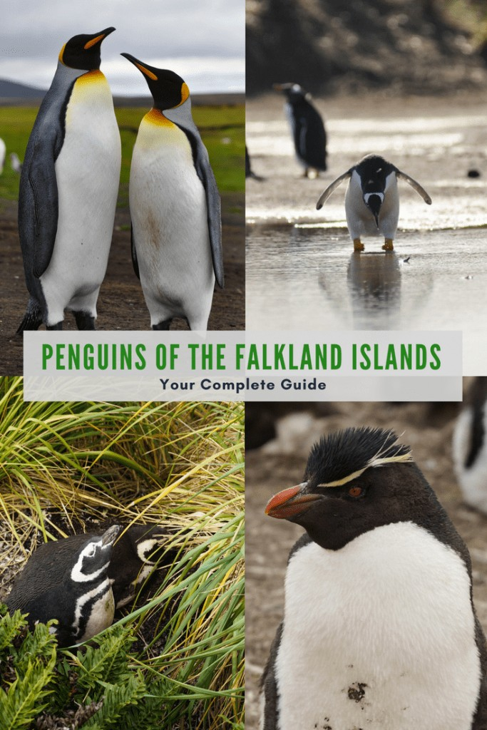 Visit the penguins of the Falkland Islands.