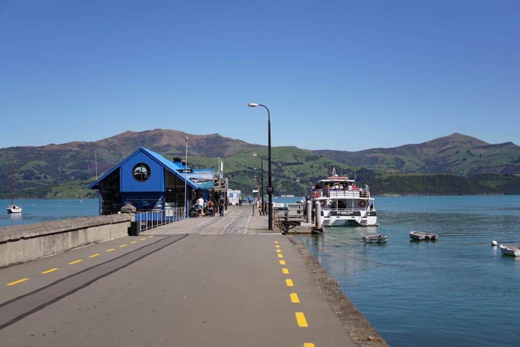 Akaroa Dolphin Swim. Black Cat Cruises Akaroa Dolphin cruise.