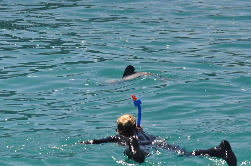 Best place to swim with dolphins in New Zealand. Swimming with dolphins NZ.