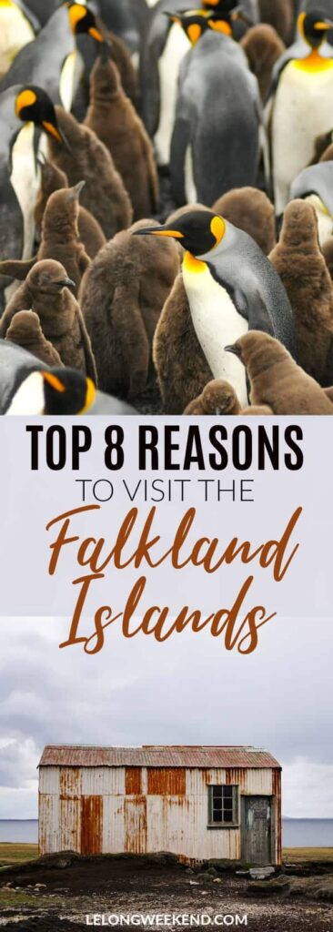 Read why the Falkland Islands deserve a spot of any adventure seekers or wildlife lovers bucket list! Falkland Islands | Adventure Holidays | Wildlife | Wildlife Holidays | Falklands | Penguins | South America | Island Holidays #falklandislands #penguins #