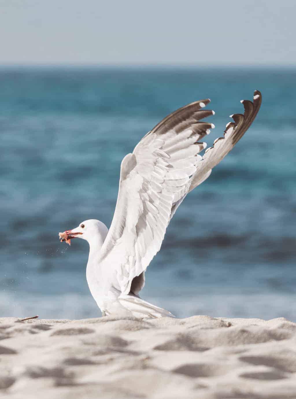 Seagull on a beach in Mallorca