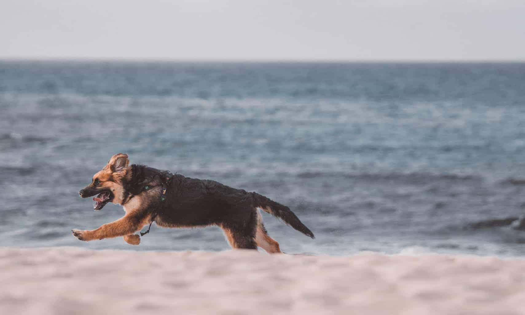 Dog on beach in Mallorca