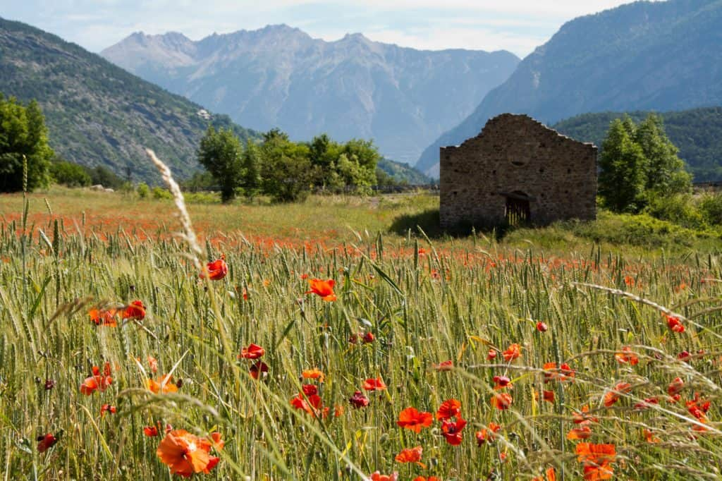 Visiting Provence, France in the Spring.