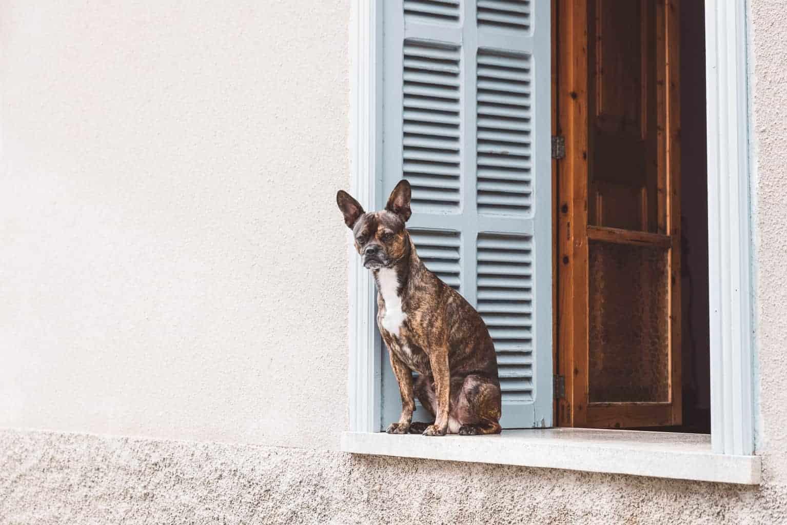 Dog in a Mallorcan village.