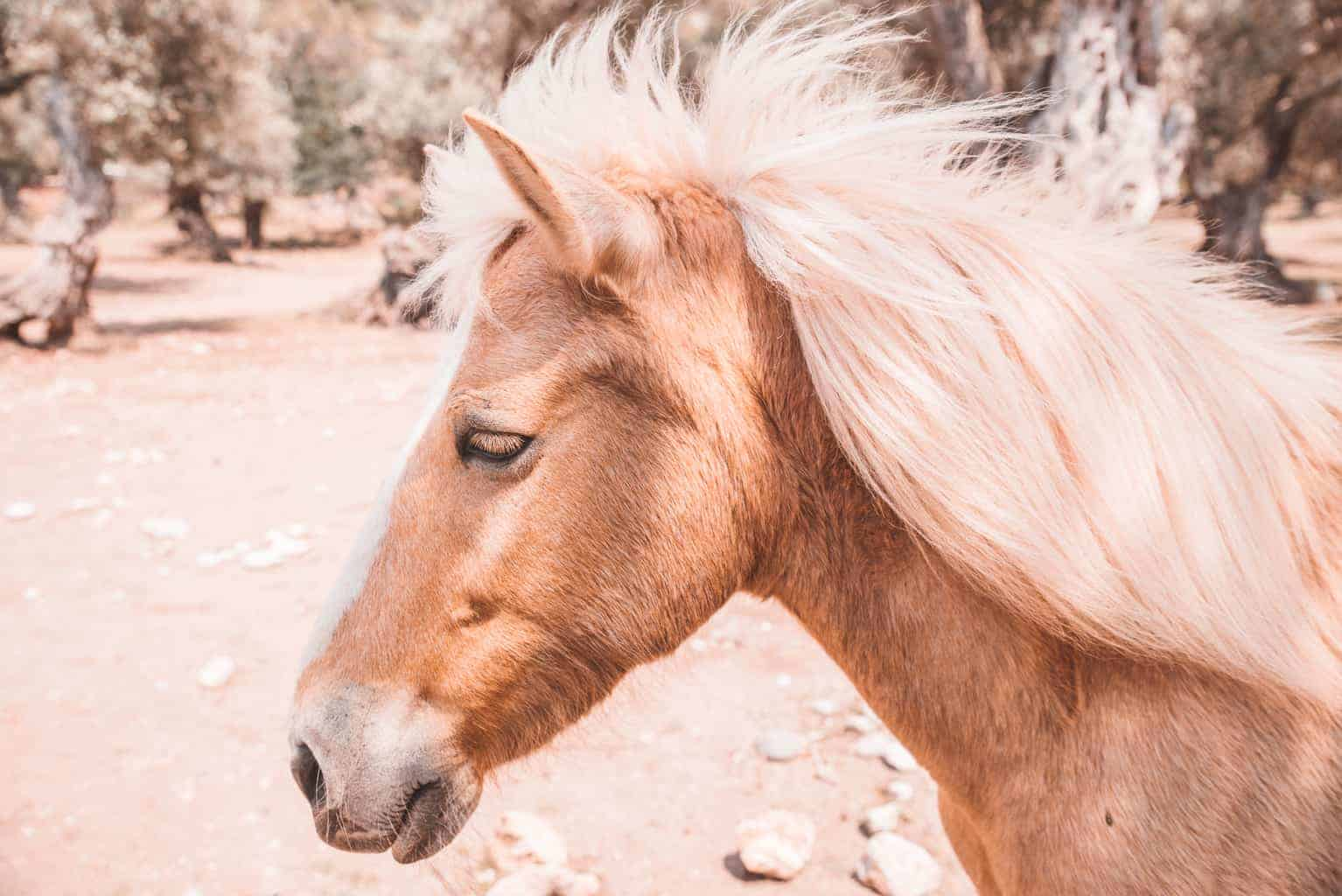 Horse at Cala Tuent beach in Mallorca.