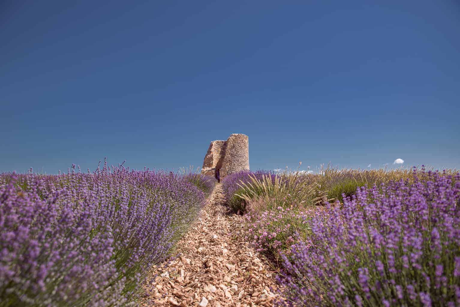 Fine lavender tour in Provence, France
