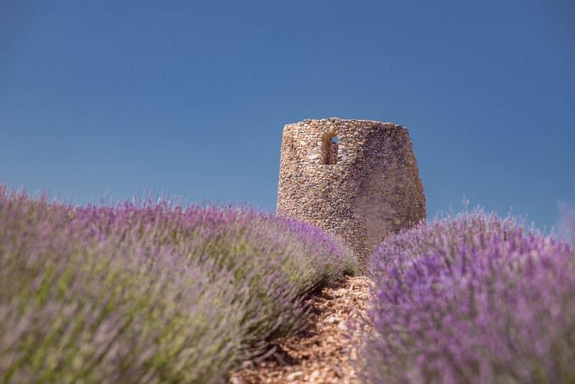 Fine Lavender Tour Provence. Chateau du Bois Lavender Farm.