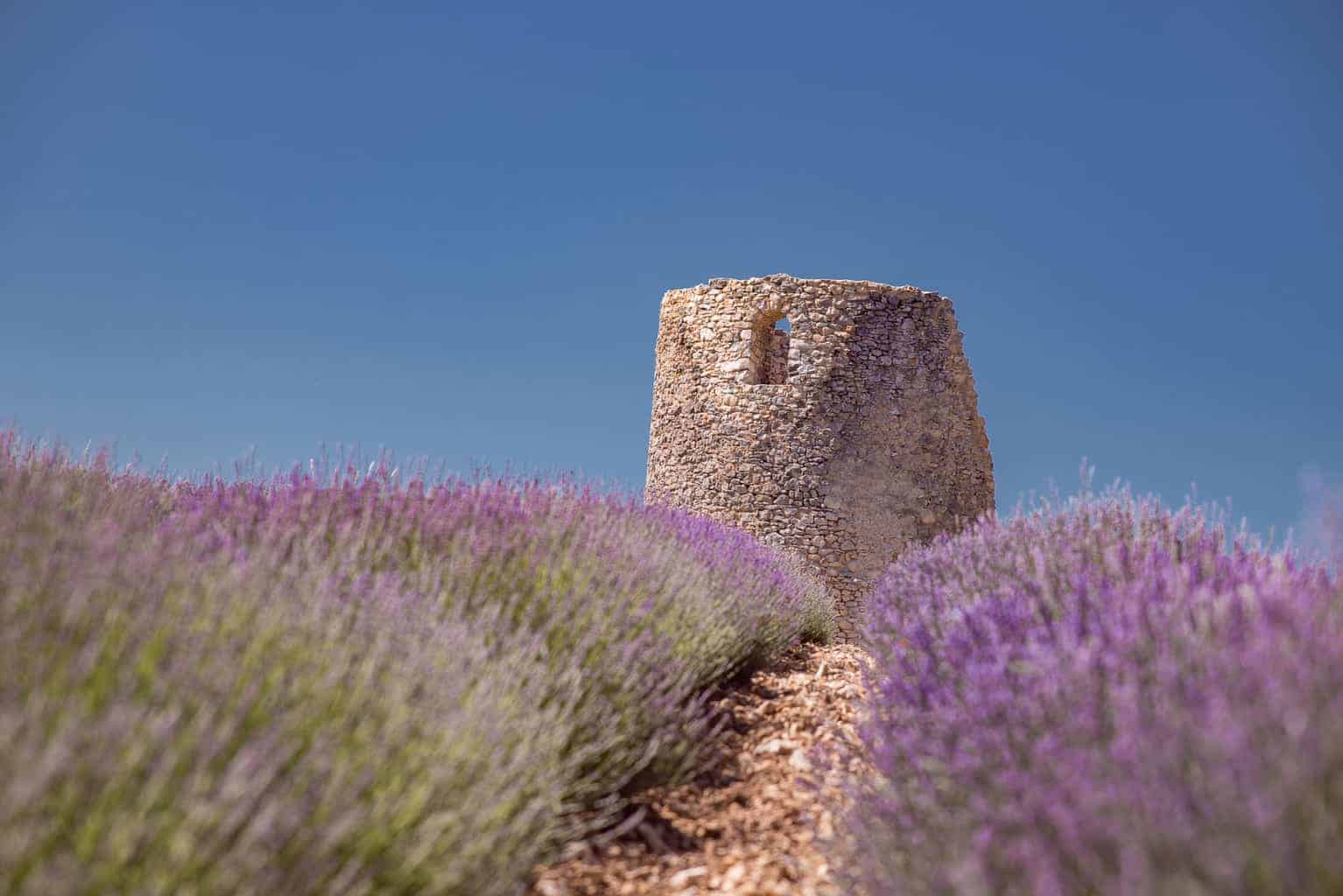 Luxury and Lavender: An Exclusive Tour to Le Château du Bois in Provence, France