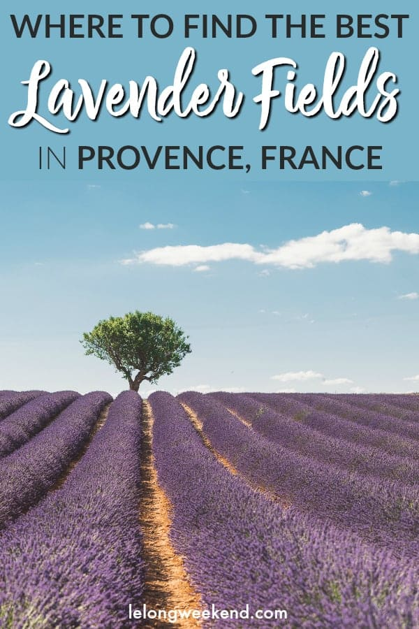Looking for the best lavender fields in Provence, France? This comprehensive guide to the Provence lavender fields details where to find the best lavender fields, where to stay, and the best lavender routes in Provence!