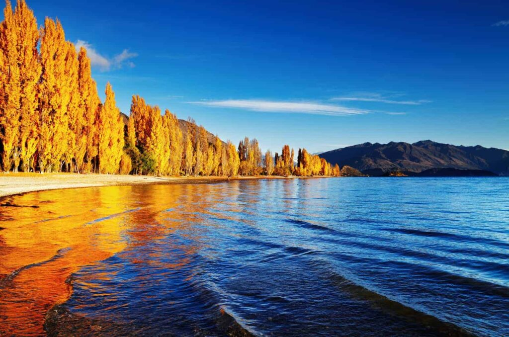 Lake Wanaka is home to some of New Zealand's best lake beaches