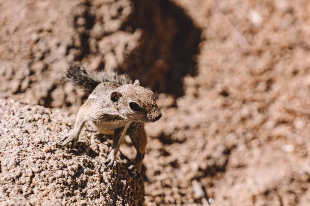 Animals of Joshua Tree National Park
