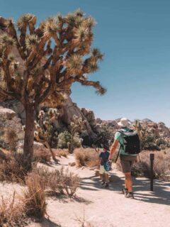 Joshua Tree with kids - Family friendly walks in Joshua Tree National Park