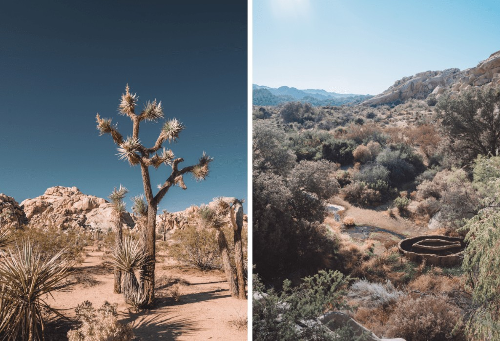 Joshua tree with kids - family friendly hikes in JT