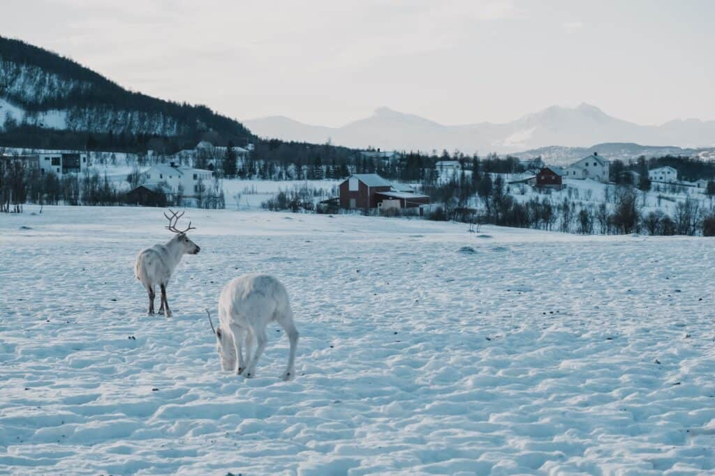 Tromso, Norway, is a winter wonderland. Making it one of the best places ti visit in Europe in January.