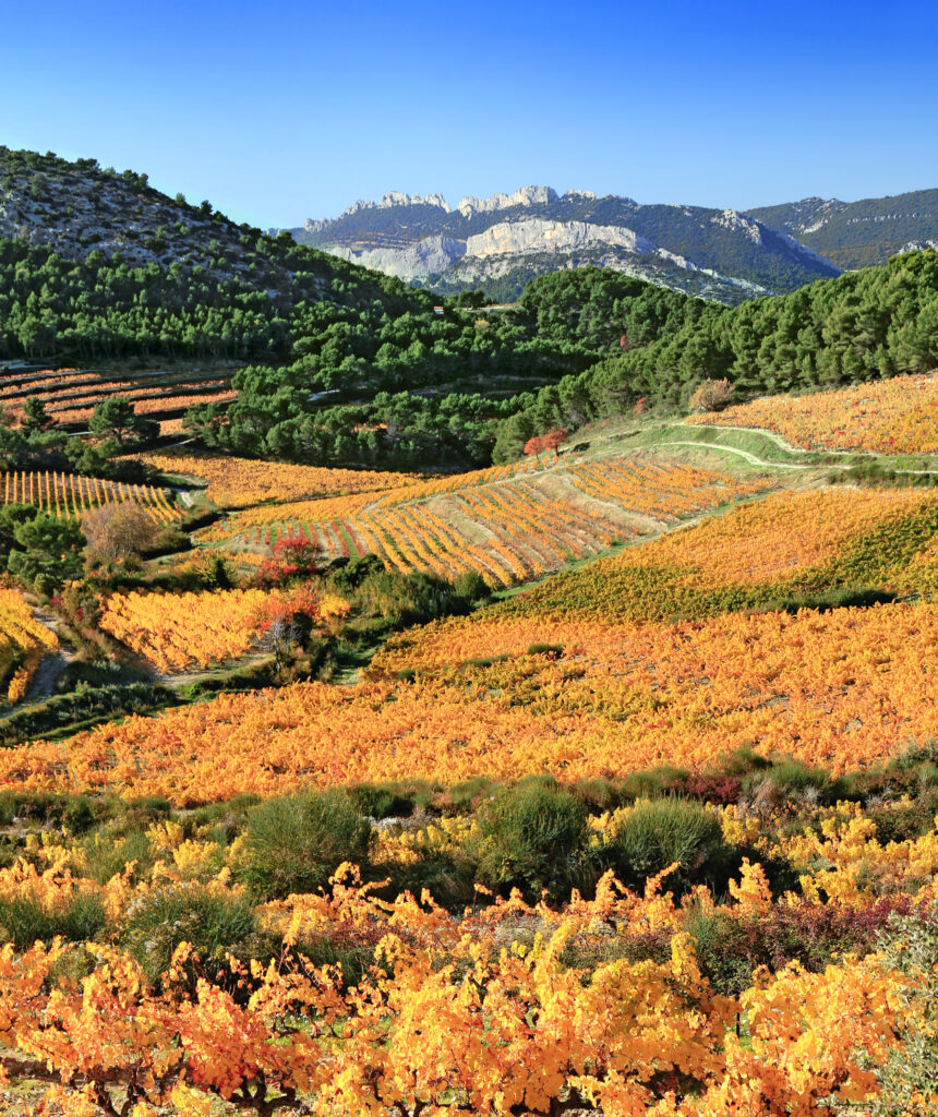 Vineyards near Carpentras in Provence, France