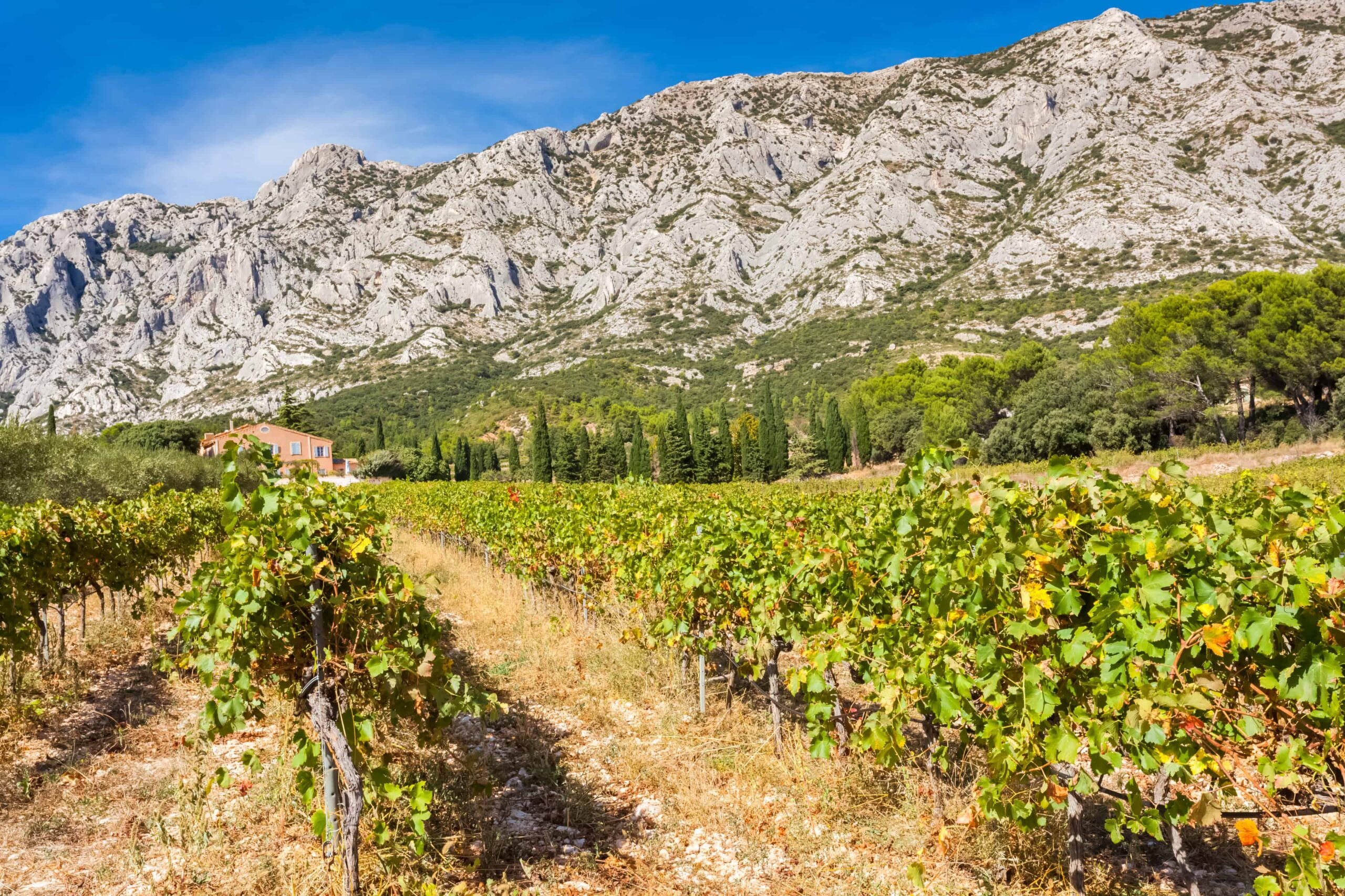 Provence Wine Guide - Provence Wineries