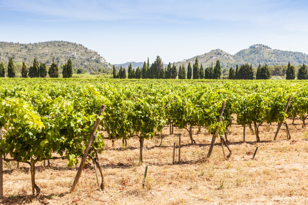 Provence wine regions - vineyard in Provence, France