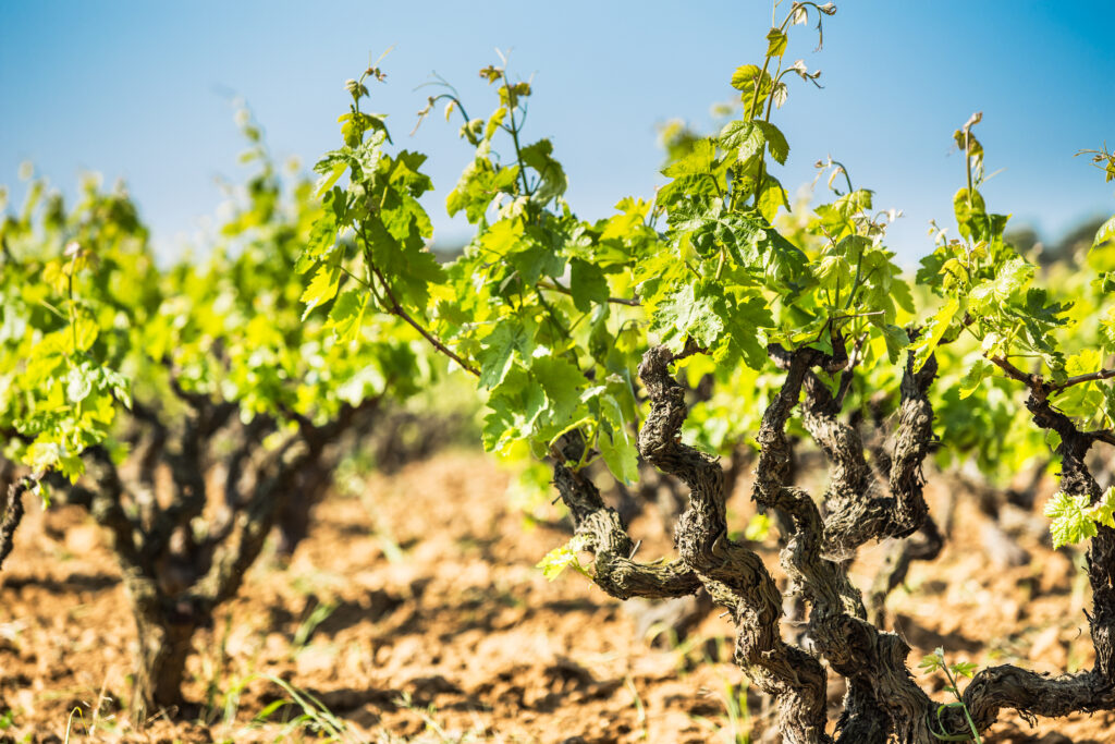 Provence wine regions in France