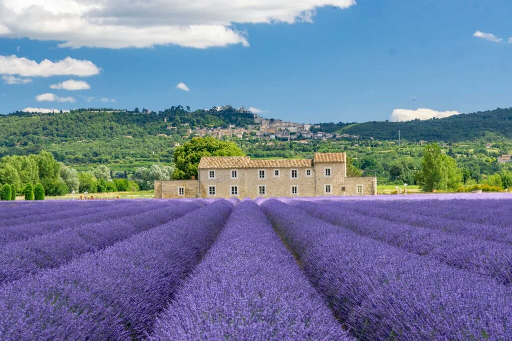 The Luberon lavender fields - Provence lavender route