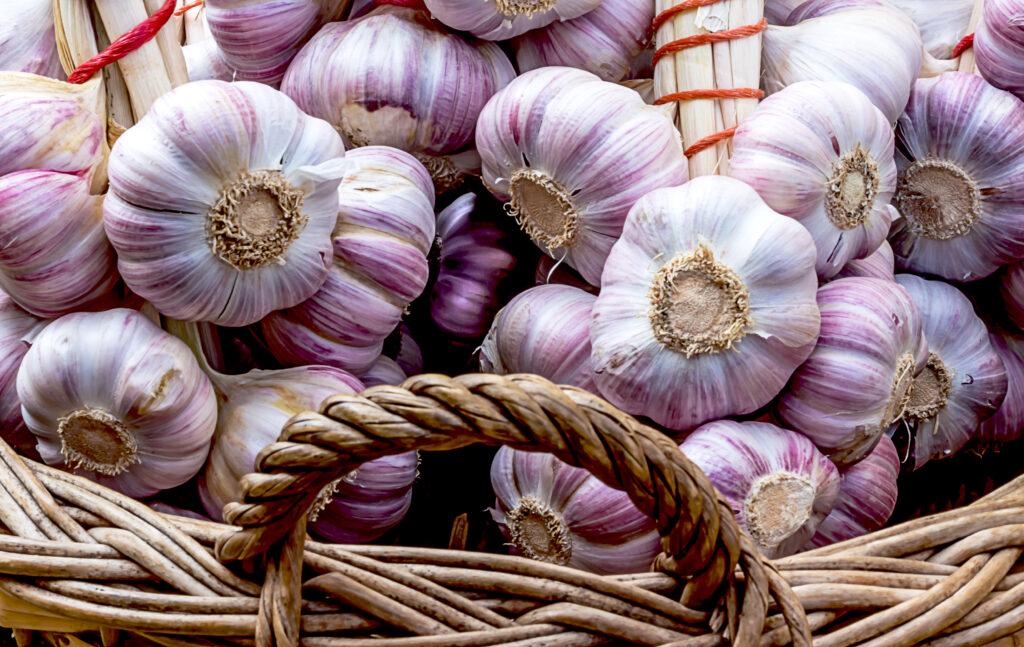 Pink Garlic festival in Lautrec, France