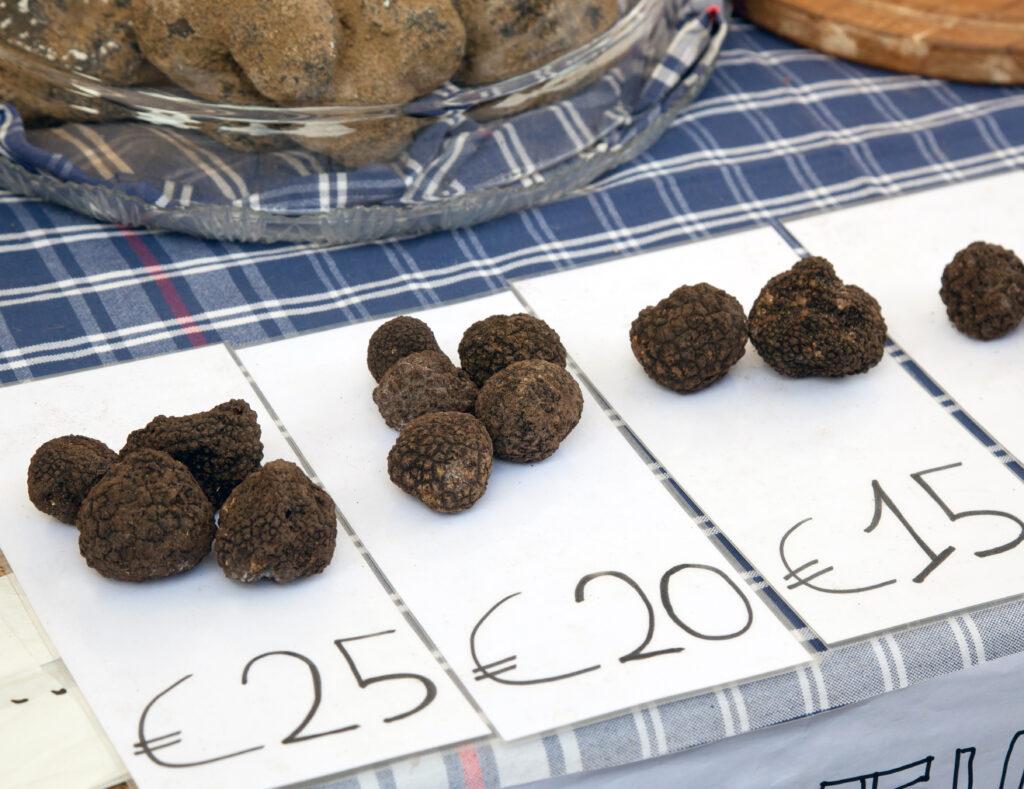 Truffle Festival France