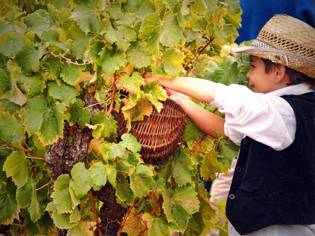 Wine Harvest festival France