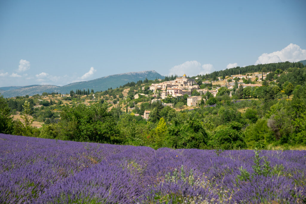 Lavender field in Sault, Provence, France