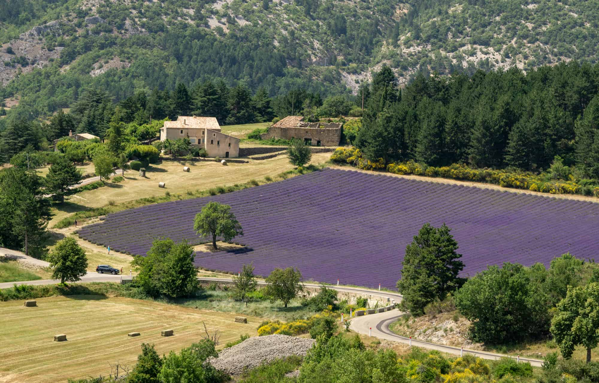 Sault lavender fields itinerary