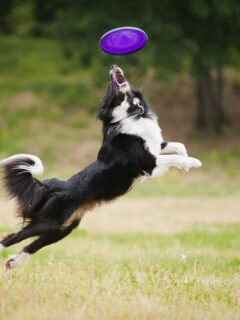 Best Dogs Parks in Auckland, New Zealand